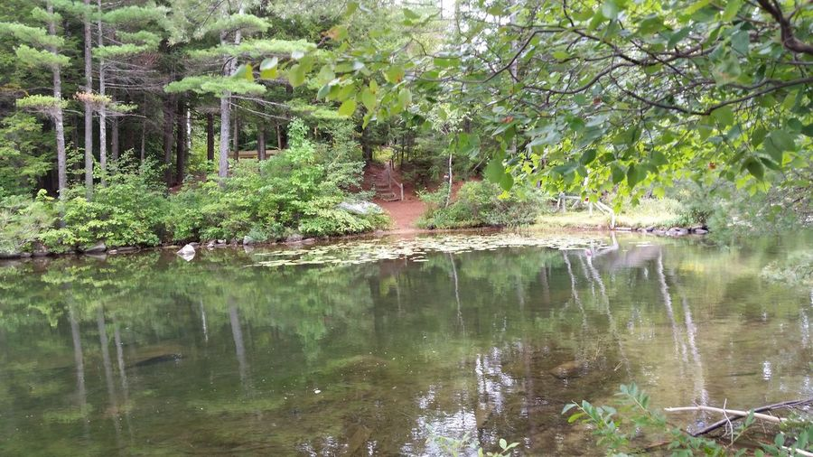 Water Tree Tranquil Scene Tranquility Scenics Forest Lake Beauty In Nature Idyllic WoodLand Discover  New England  New Hampshire Landscapes New England  Green Green Color Hidden Path Pine Needle Path Nature Lilypads Lilypads Summer Plant Remote