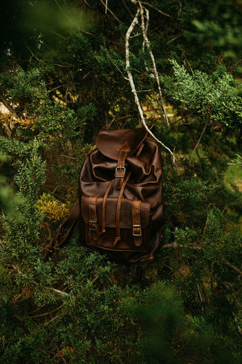 High angle view of clothes hanging on tree in forest