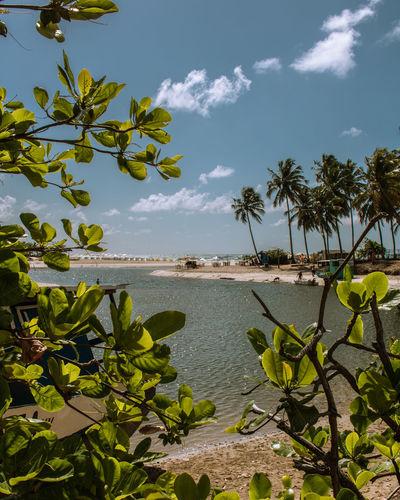 encontro com o mar Praia Beach Photography Sunset Maceió Natureza Travel Trip Nature Nordeste  Alagoas Rio Naturais Belezasnaturais Belezasdobrasil Tree Water Palm Tree Sea Beach Tropical Climate Irrigation Equipment Sky Landscape Cloud - Sky
