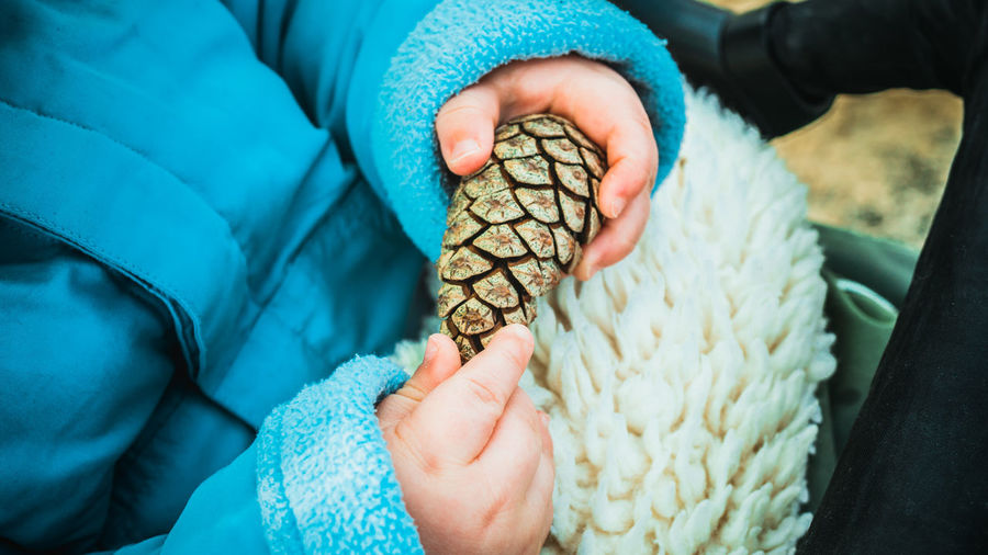 Midsection of person holding pine cone