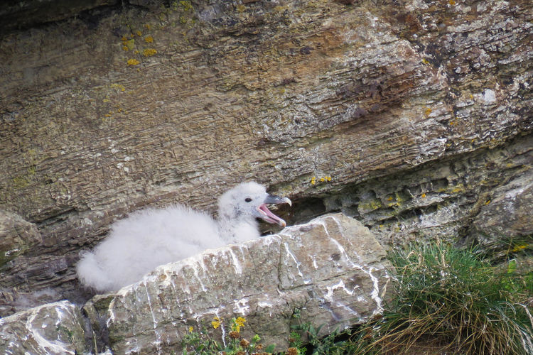 One Animal Bird Young Animal Rock Outdoors Young Bird Rock - Object Nest Nesting Nesting Birds Seagull Gull Young Life  Feeding The Birds