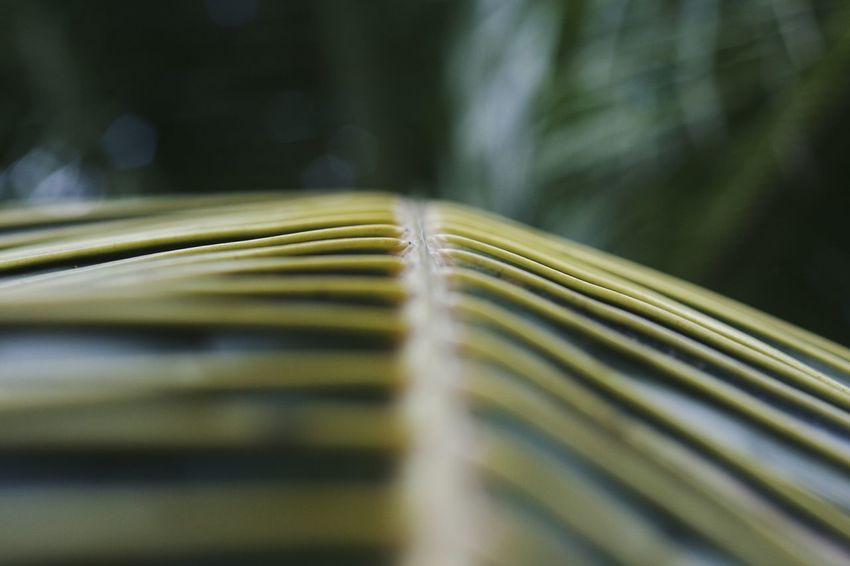 Palm Tree Nature Beauty Macro Nature Green Palm Unfocused