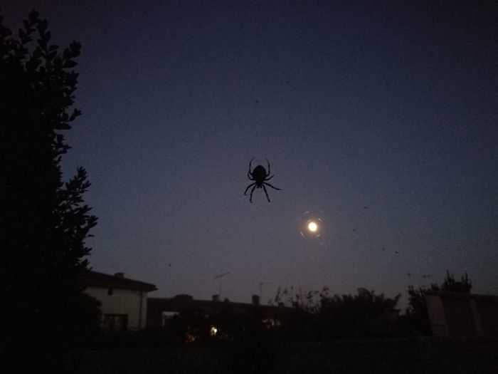 👽 Spider from