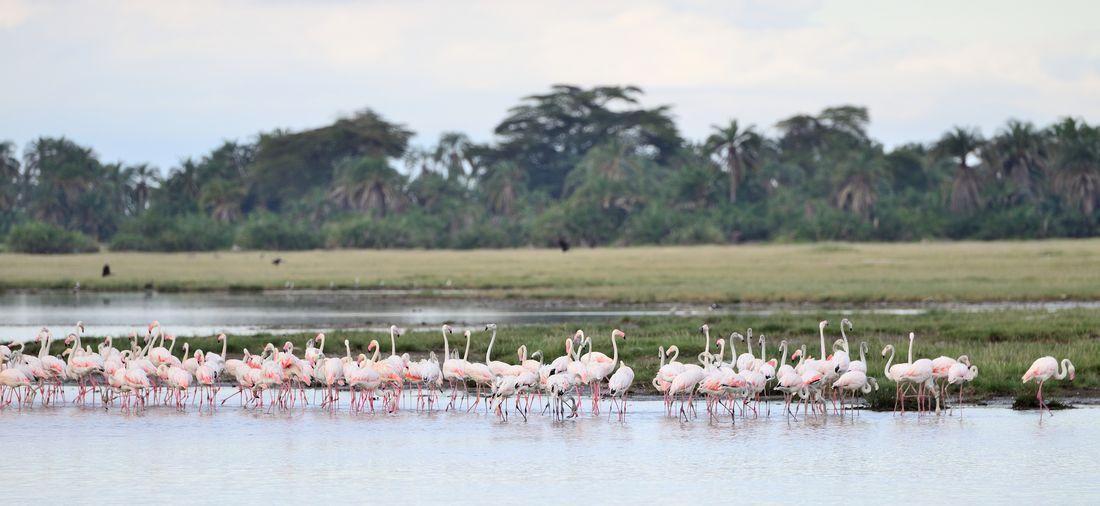 Flamingos perching in lake against sky