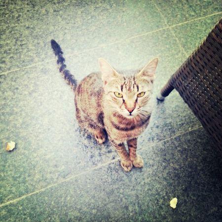 it's gonna kill me :( Catoftheday Devil Looks In Adana