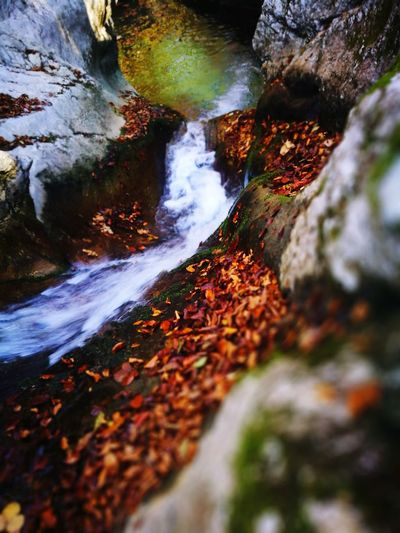 Water Motion Nature Rock - Object Outdoors Beauty In Nature Waterfall Day No People River Travel Destinations Scenics Forest Power In Nature Autumn Beauty In Nature Riverside Wilderness