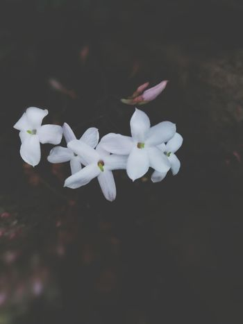 The Week On EyeEm No People Plant Close-up Nature Day Outdoors Flower Beauty In Nature Freshness