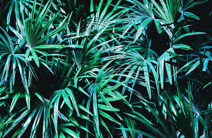 50+ Green Background Pictures HD | Download Authentic Images on EyeEm