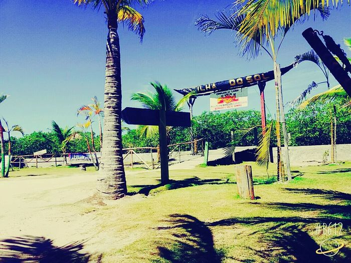 Praia 😎 Palm Tree Tree Beach People First Eyeem Photo Sky Outdoors Day No People Nature