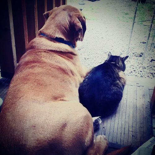 Pet Portraits Pets No People Best Friends Dogcatfriendship