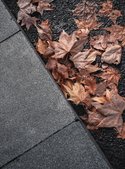 Dry winter leaves Leaf No People Dry Nature Close-up Leaves Sidewalk Brown Diagonal High Angle View Outdoors Autumn Maple Leaf Paving Stone Textured  Day