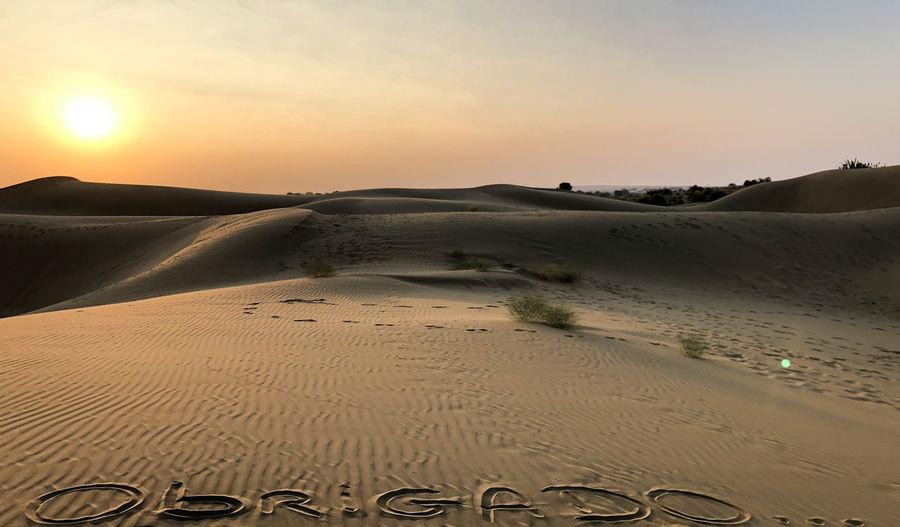 Desert India Sheepherd Travel Beach Camel Desert Jaisalmer Nature Obrigado Outdoors Rajasthan Sand Sand Dune Scenics Sheep Sky Sun Sunset Thar Desert