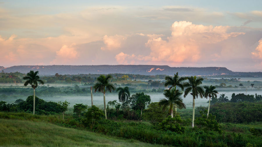 Cuba, Cuba Sunsrise Sunrise Sunset Tropical Climate Non-urban Scene Nature Landscape Scenics - Nature Cloud - Sky Beauty In Nature Sky Plant Tree Palms Palm Tree Outdoors Tranquility Tranquil Scene No People Land Field