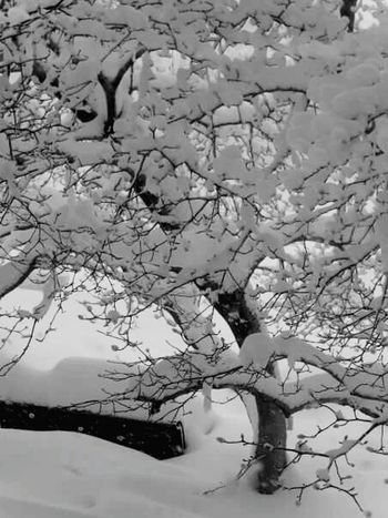 Winterscapes Snowy Trees Snowy Branches EyeEm Best Shots - Black + White Snowpocalypse Snow It's Cold Outside Snow Accumulation