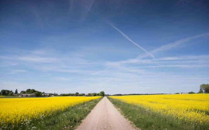 Scenic View Of Oilseed Rape Field Against Blue Sky