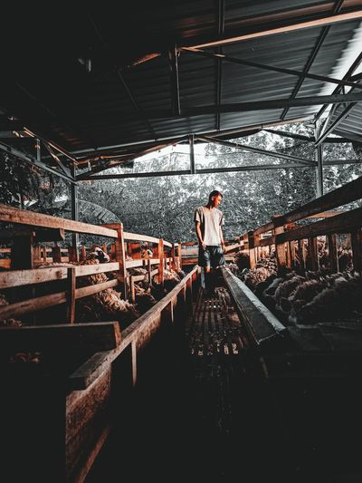 Man standing in dairy farm