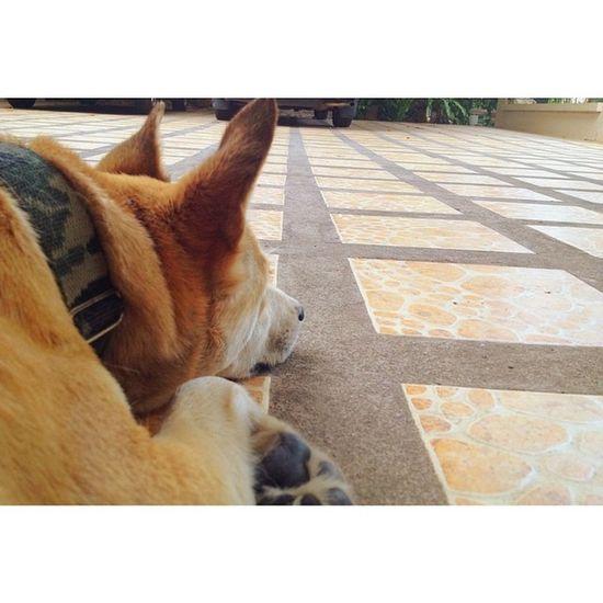 Dog Waiting Bangkok Thailand Thaionly Animal