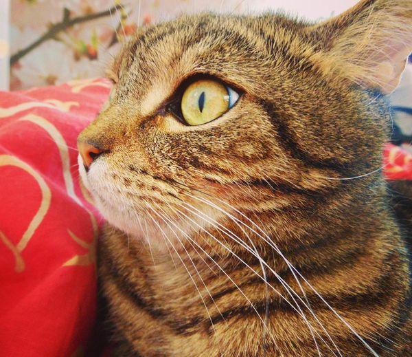 кот котэ няша лапа прелесть усатик пушистик животное пупсик Cat Cats глаза  Eyes