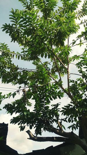 🍏 Tree Nature Leaf Branch Outdoors Growth No People