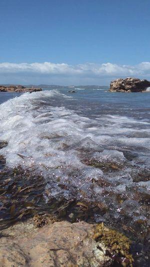 Algea Rocks