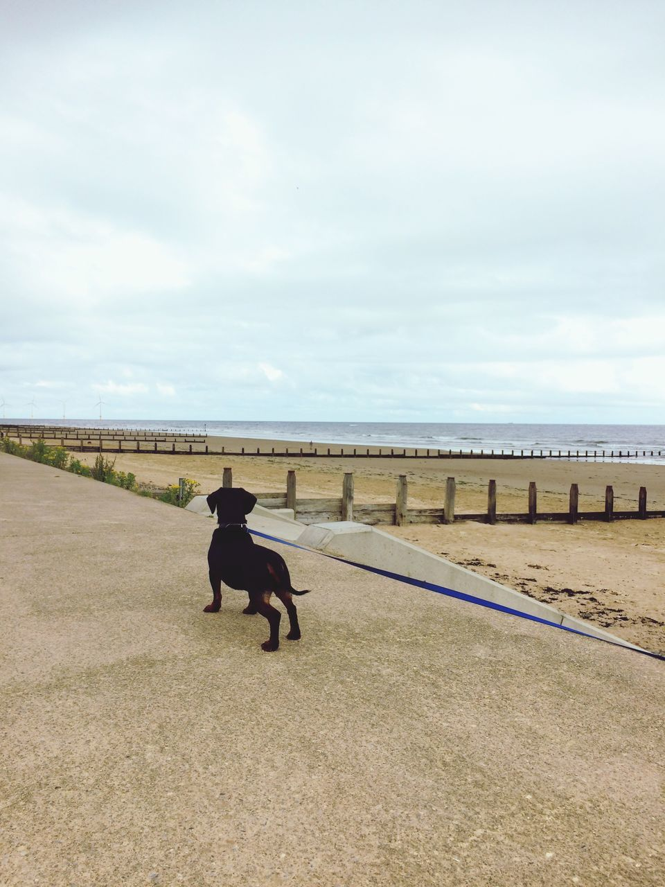 Dog On Walkway By Beach