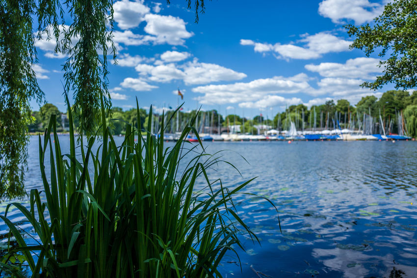 Hamburg Alster area Beauty In Nature Cloud - Sky Day Grass Green Color Growth Lake Nature Nautical Vessel No People Outdoors Plant Sailboat Scenics - Nature Sky Tranquil Scene Tranquility Transportation Tree Water