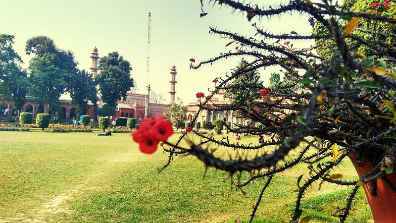 Red Sky Flower Outdoors Day Freshness Architecture Mosque Park nature Nature Historical Building Building Amu