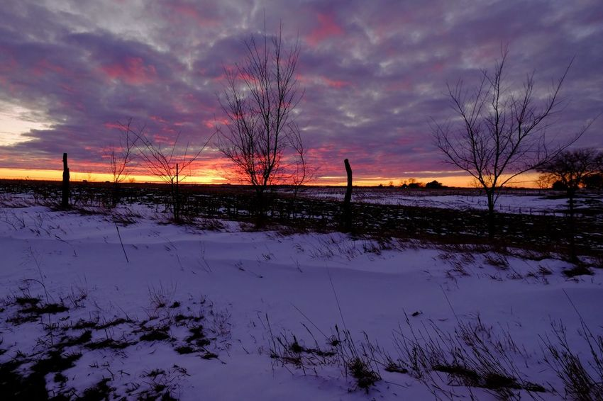 Sunset study Village of Western, Saline County Nebraska January 2018 Camera Work EyeEm Best Shots EyeEm Gallery FUJIFILM X-T1 Farmland Fujinon 10-24mm F4 Rural America Sunset Silhouettes Sunset Study Sunset_collection Visual Journal White Balance Effect Winter Always Taking Photos Bare Tree Beauty In Nature Cloud - Sky Cold Temperature Day Field Frozen Landscape My Neighborhood Nature Nebraska Sunsets  No People Outdoors Photo Diary Photography Practicing Photography Rural Landscape Rural Life Rural Scene S.ramos January 2018 Scenics Sky Snow Sunset Tranquil Scene Tranquility Tree Weather Winter