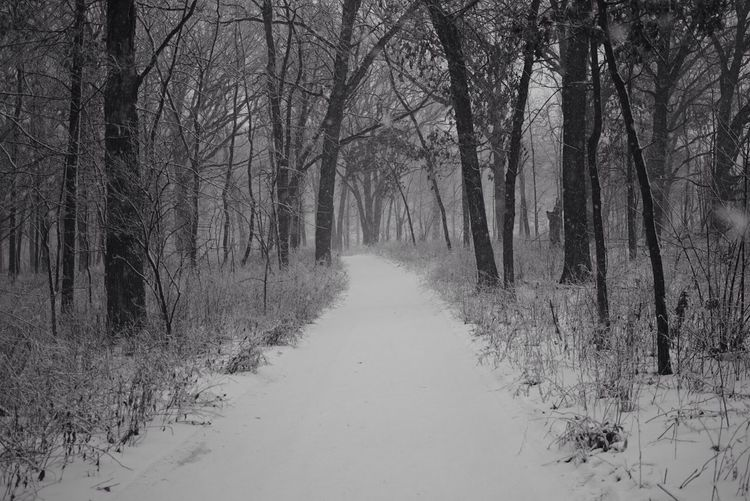 Footpath In Snow Covered Forest