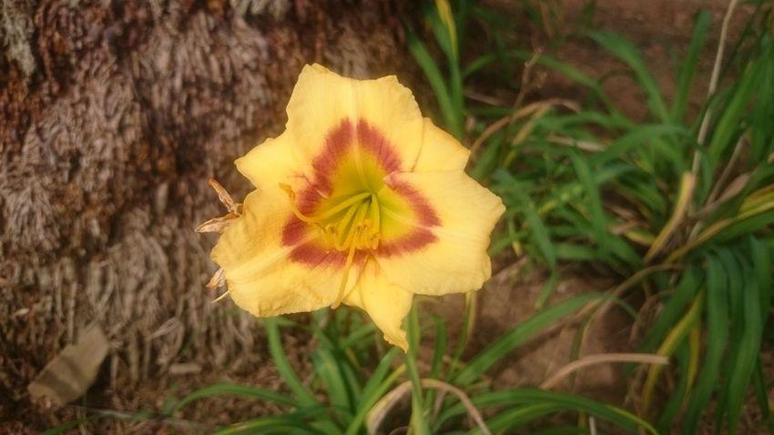 Flowers Semfiltro XperiaZ1 Campinas, São Paulo, Brasil Natureza 🐦🌳 Parquedasaguas
