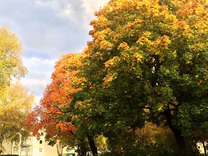 Germany Schleswig October Autumn Fall Fall Colors Fall Beauty Tree Growth Change Leaf Nature Sky Outdoors Day Beauty In Nature EyeEmNewHere Eyeemnaturelover Eye Em Nature Lover