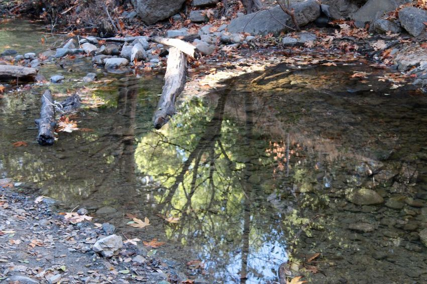 During our Creek study at Science Camp- reflections of trees in the Creek water Rock - Object Nature Water No People Day Outdoors Beauty In Nature Reflection USA Cupertino California Landscape Creekside Trail Sunset
