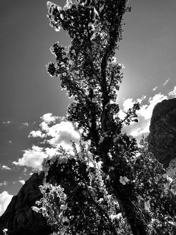 In in the branch Tree Sky Plant Beauty In Nature Nature Growth Low Angle View Sunlight Branch Flowering Plant Flower Tranquil Scene Blossom Scenics - Nature Cloud - Sky Outdoors Close-up Tranquility Day No People