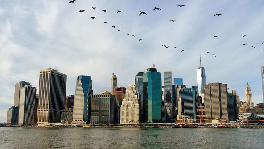 Skyline New York Flying Architecture Skyscraper City Bird Sky Built Structure Large Group Of Animals No People Mid-air Outdoors Flock Of Birds Water Animals In The Wild Animal Themes Travel Destinations Building Exterior Tower Urban Skyline River The Graphic City