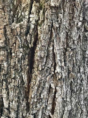 Texturas Naturais Beauty In Nature Abstract Pattern Abstract Abstract Nature Abstract Backgrounds Trunk Texture Trunk Tree Trunk Full Frame Backgrounds Pattern No People Textured  Day EyeEmNewHere Close-up Outdoors Sunlight Nature High Angle View White Color Rough Wrinkled