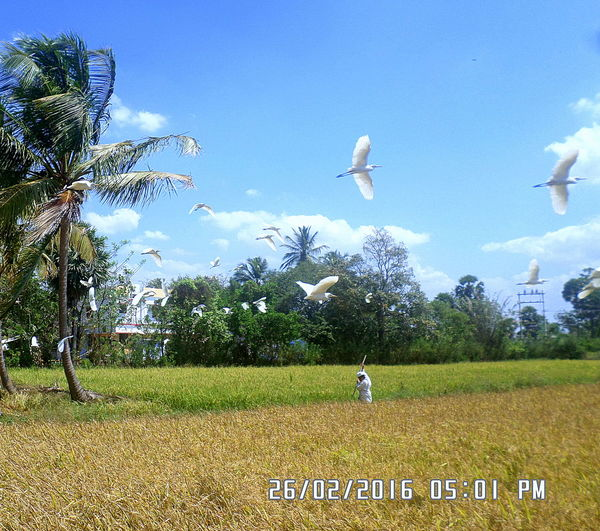 Nature at its fullest!!! First Eyeem Photo Nature Photography Birds Fields Paddy Field Countryside