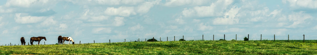 Panoramic view of horses grazing on field against sky
