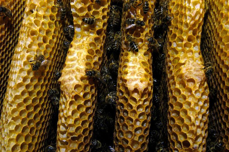 Full frame shot of yellow food