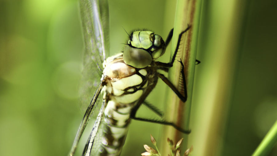 Close-up of insect on plant