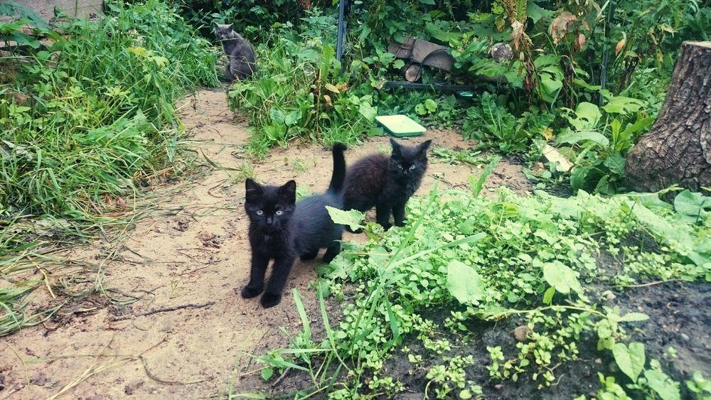 Black Cats Black Kitty Cat Black Kitten BLackCat Kitten Kittens Animals Cats Cat