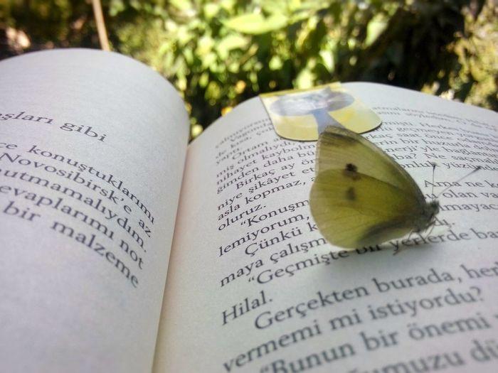 tam kitap ayracımı kaldığım yere bırakıp Paulocoelho ile olan randevuma son vercektim ki bahçede olduğumu hatırlatan bi davetsiz misafir kondu sohbetimize Book Readtime Paulo Coelho Elif Garden Green Sayfalar Butterfly Kelebek Kitaplar Sun Relaxing Huzur Cheerful Lifeisgood Lifeisbooks Bestfriend NumberOne Hobby FreeTime Smile Cat Kitapkokusu Kitaplariyikivar