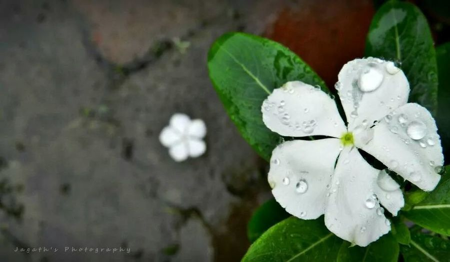 As The Rain Falls Rain