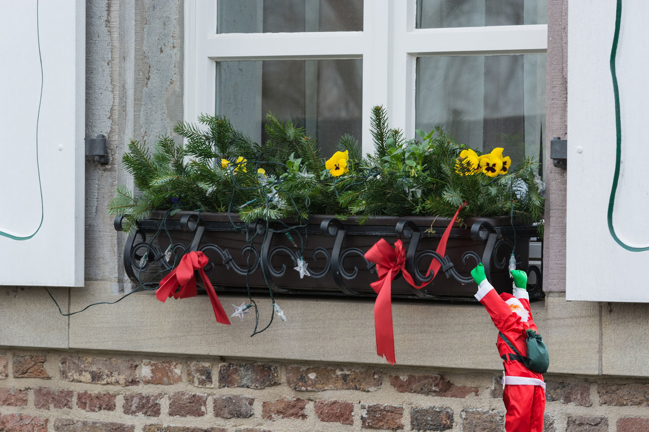window, architecture, building exterior, day, built structure, outdoors, growth, red, plant, hanging, no people, nature, window box