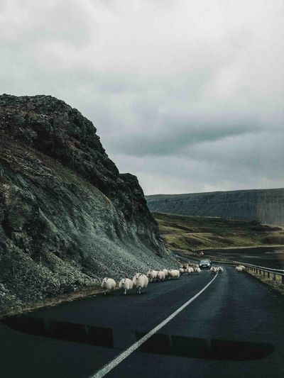 Flock Of Sheep On Road By Mountains Against Cloudy Sky
