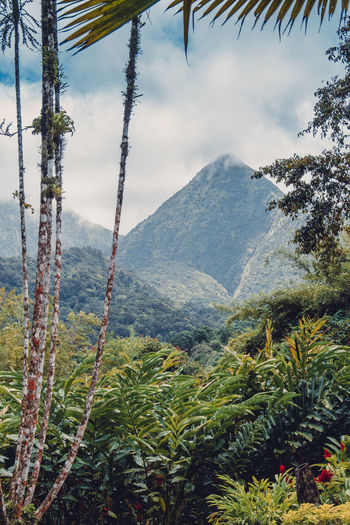 Martinique, Jardin de Balata Martinique Montagne Pelée Beauty In Nature Day Environment Green Color Growth Idyllic Island Landscape Mountain Mountain Peak Mountain Range Nature No People Outdoors Plant Scenics - Nature Sky Tranquil Scene Tranquility Tree Tropical Tropical Climate Tropical Plants