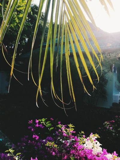 Plant Flowering Plant Flower Growth Nature Beauty In Nature Day Freshness No People Outdoors Sunlight Fragility Lens Flare Vulnerability  Sky Tree Sunbeam Green Color Yellow Close-up