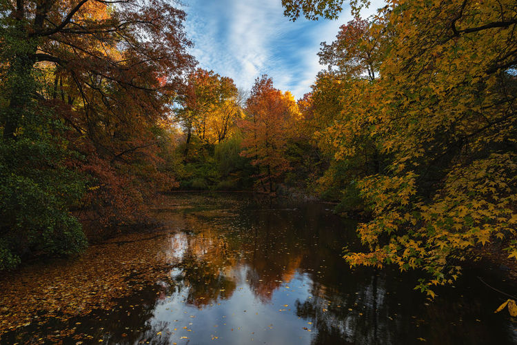 Scenic view of lake amidst trees in forest during autumn