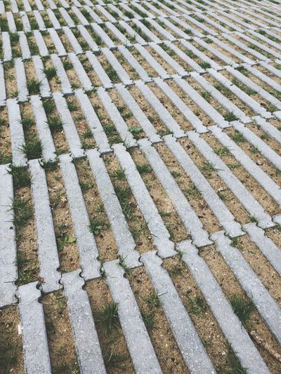 Full frame shot of patterned footpath in garden