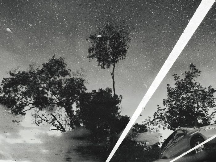 Rainy day Blackandwhite Streetphotography Black And White Streetphoto_bw Monochrome Puddle Rainy Days Rainy Road Puddlejumper Shadow Shadow In Puddle Tree Palm Tree Sky