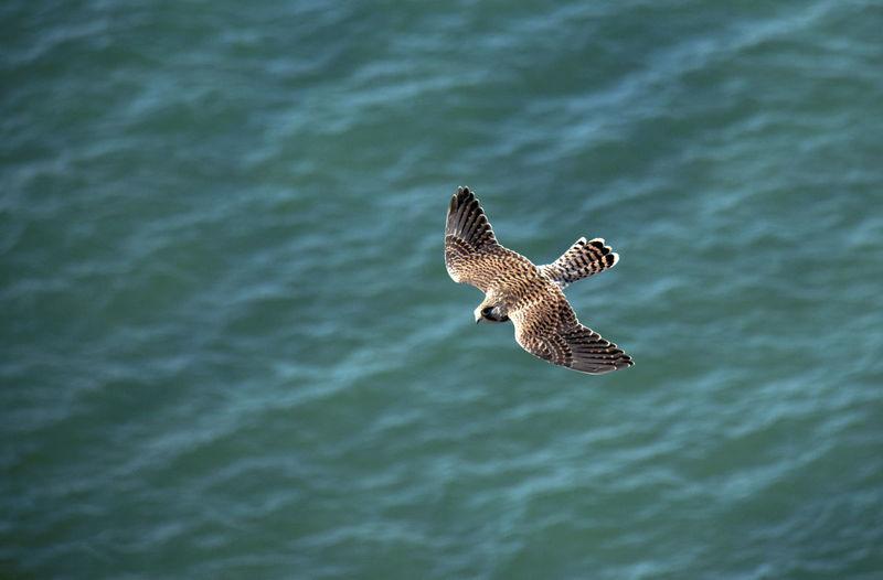 High angle view of bird flying over sea